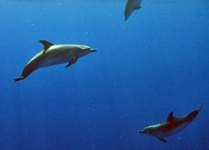 nager-dauphins-a