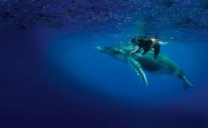 nage-avec-baleines