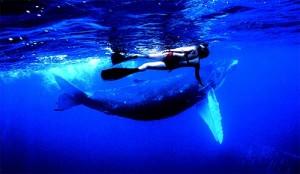 nage-baleine