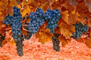 route-des-vins-beaune